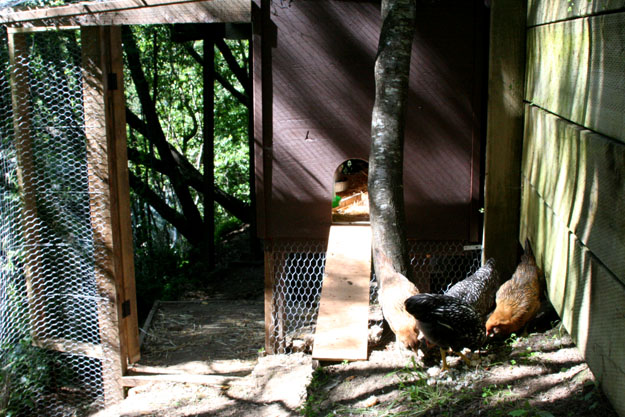chickencoop2-625